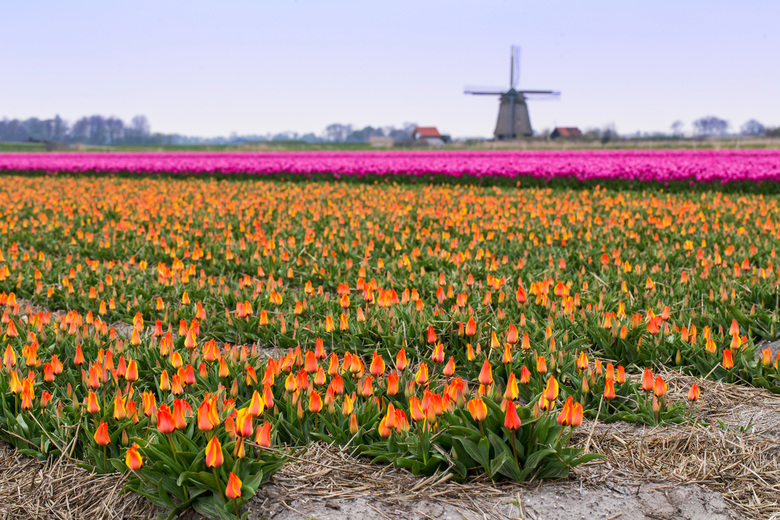 Hollandse lente -