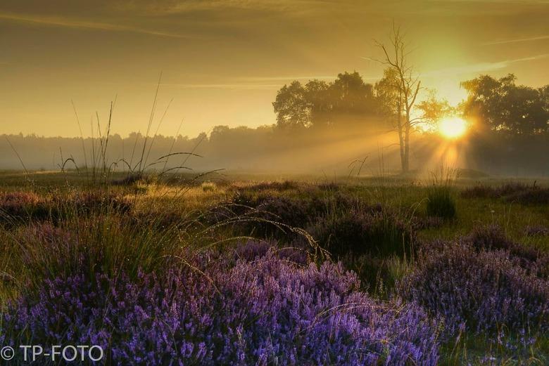 De grote heide, Venlo. - Deze foto gemaakt tijdens de zonsopkomst op de Grote Heide in Venlo is genomineerd voor de fotowedstrijd van Het Limburgs Lan