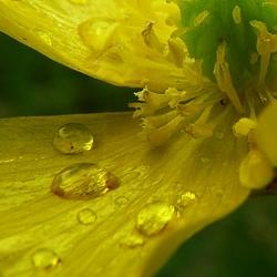 """""""Gouden"""" regen..."""