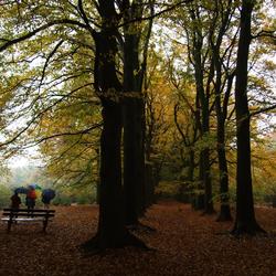 Herfstkleuren tijdens de regen in het bos