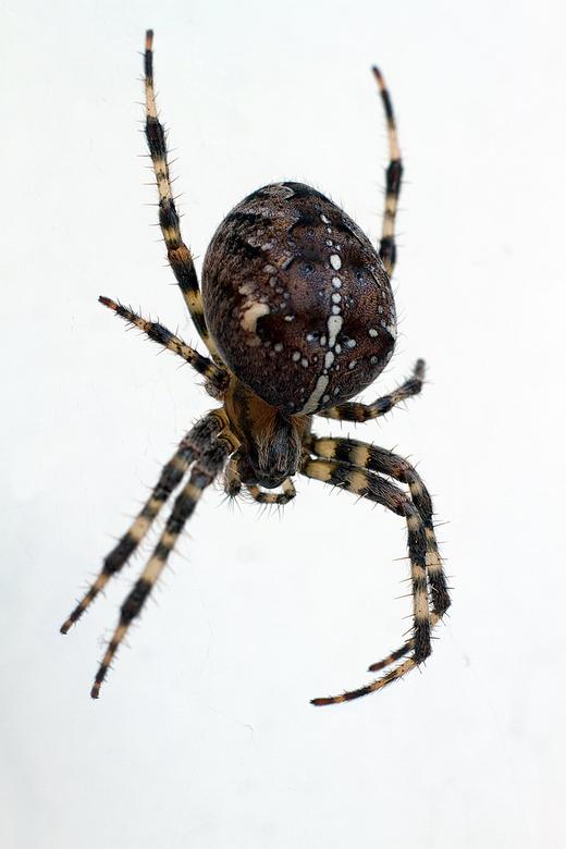 """Itsy Bitsy Spider - Lekker buiten met dit weer, en dan toch even de cam weer gepakt voor een macro shot <img  src=""""/images/smileys/smile.png""""/><br />"""