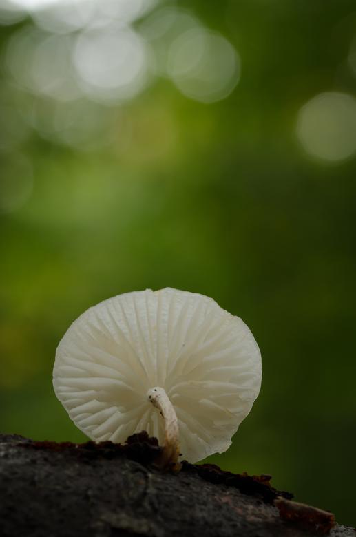 Breekbaar maar toch sterk - Vandaag een fantastische eerste paddenstoelenzoomdag gehad.<br /> Het begon met stevige regen maar daarna klaarde het moo