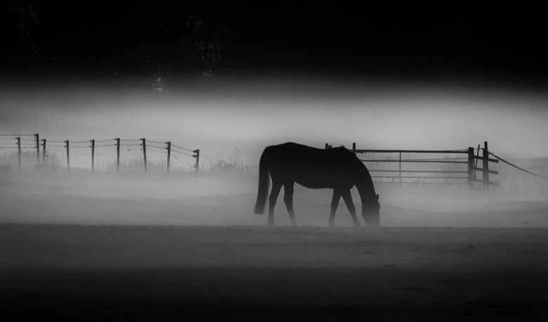 Misted Mare