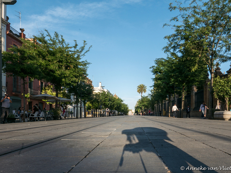 Sevilla Calle San Fernando -