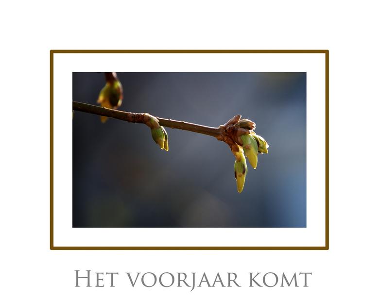 Het voorjaar komt! - Gemaakt in de tuin 2/3/2011