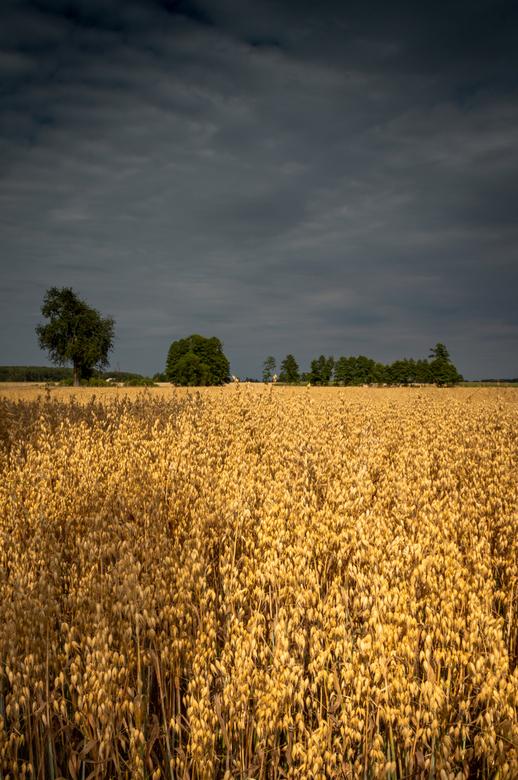 In het veld -