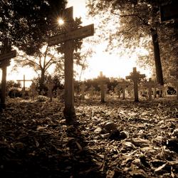 Graveyard sunshine