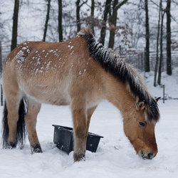 Honger in winter