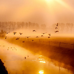 Golden misty sunrise...
