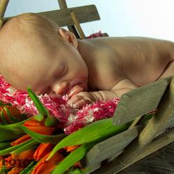 op een bedje tulpen