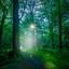 bos 1_bewerkt-1