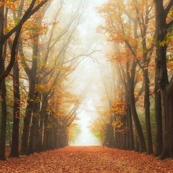 The misty tree path