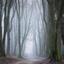Mistige morgen in het Speulderbos