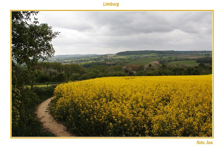 Limburg 4 - 'n stukje van het mooie Limburg. In de buurt van Epe zagen we deze grote koolzaadvelden. Ieder bedankt voor de reactie op mijn vorige