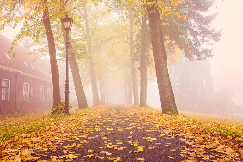 Herfst & Mist - Dichte mist trok over een park en creëerde een prachtige sfeer samen met de kleuren van de herfst.