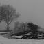 Suikerbieten in de sneeuw