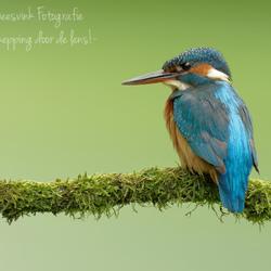 Nederlands mooiste vogeltje