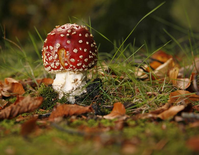 rood met witte stippen - Landgoed Clingendael  in Den haag.<br /> het was er zo mooi deze herfst.<br /> Groetjes Grady fijne avond