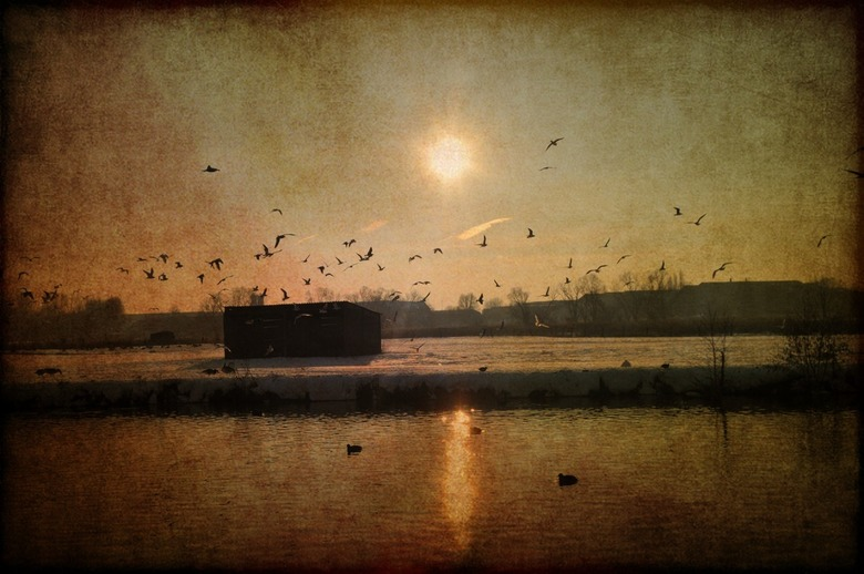 birds over the field - een enorme vlucht vogels die neerstrijkt over een besneeuwde weide aan het water,en een flauwe zon die alles weerkaatst in het