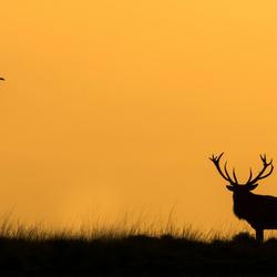 Het hert en de raaf