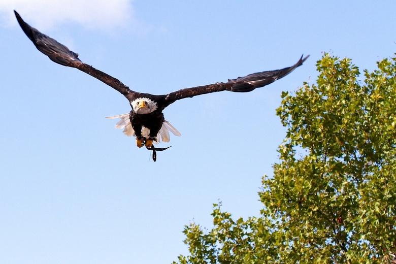 Vlucht Photokina 2012 - Genomen bij de Vogelshow, Photokina 2012<br />