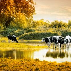 Herfstkleuren-Nederlands landschap