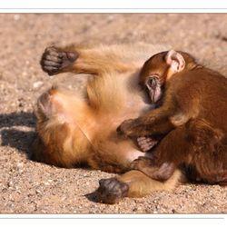 Cuddle....!