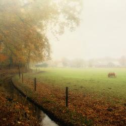 A foggy autumn day