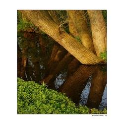 Treeflections!