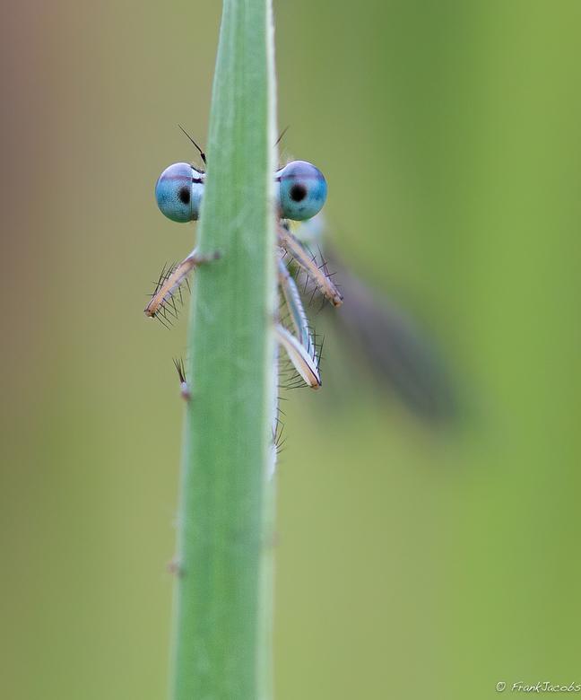 Een oogje (of 2) hebben op iemand :-) :-)