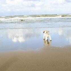 Sammie's ontmoeting met de zee