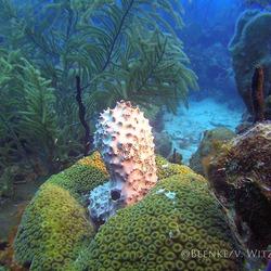 OnderwaterSculptuur