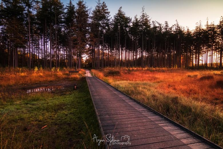 Herfstkleuren in het bos -