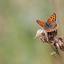 een van de 1e vlindertjes