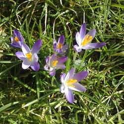 De lente zet voorzichtig door...