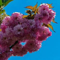 Mei maand, lente maand of toch april ?