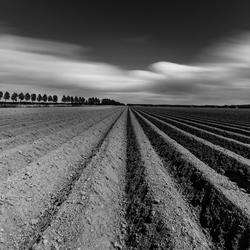 Aardappelruggen in zwart-wit