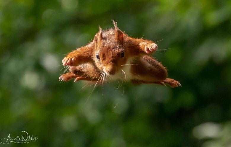Superman!  - Superman!<br /> Pas op voor overvliegende eekhoorns