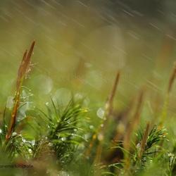 Regen boven het mos