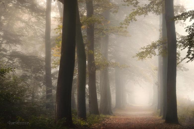 "Mystical Morning. - Fijne week allemaal! <img  src=""/images/smileys/wilt.png""/>"