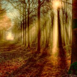 warm forestlight