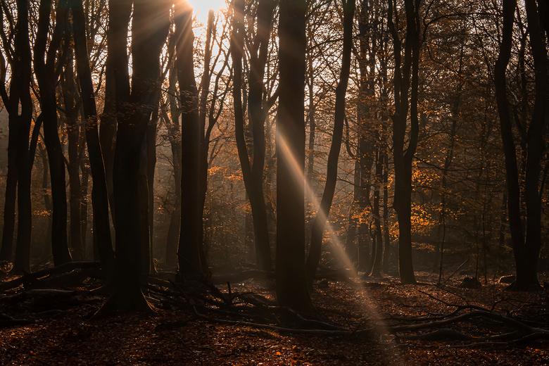 Herfst in het Speulderbos - Gisteren een supergezellig dag gehad in het Speulderbos waar de herfst nu echt zijn intrede heeft gedaan. Het gaat hard en