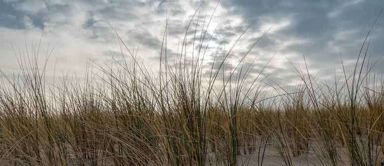 In de duinen -
