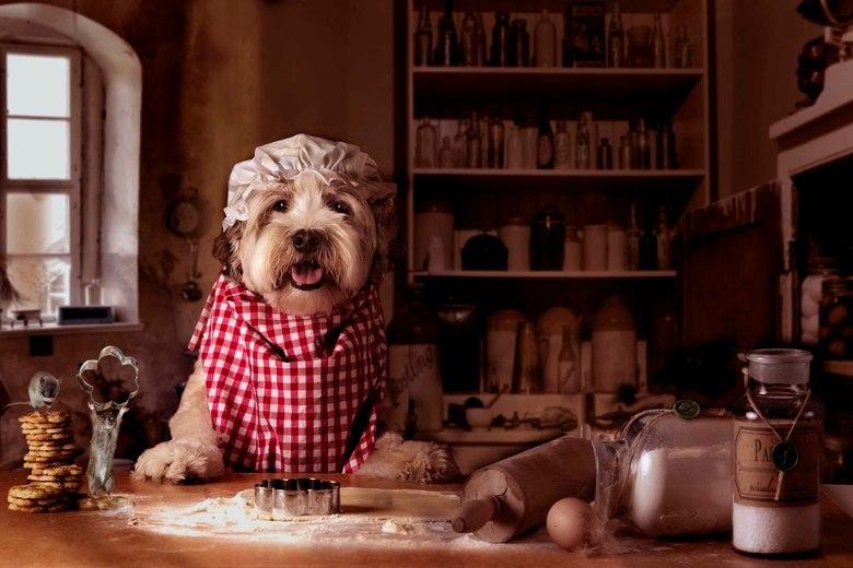 mollydeegfinal - Molly is al druk met de kerstvoorbereidingen, koekjes bakken! De ratjes helpen, of nou ja, die doen kunstjes met de koekjesvorm..