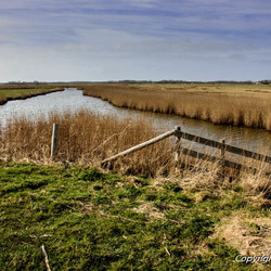 Natuurgebied Waal en Burg