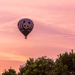 Panda Ballon WWF