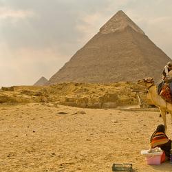 Kamelen bij de pyramieden