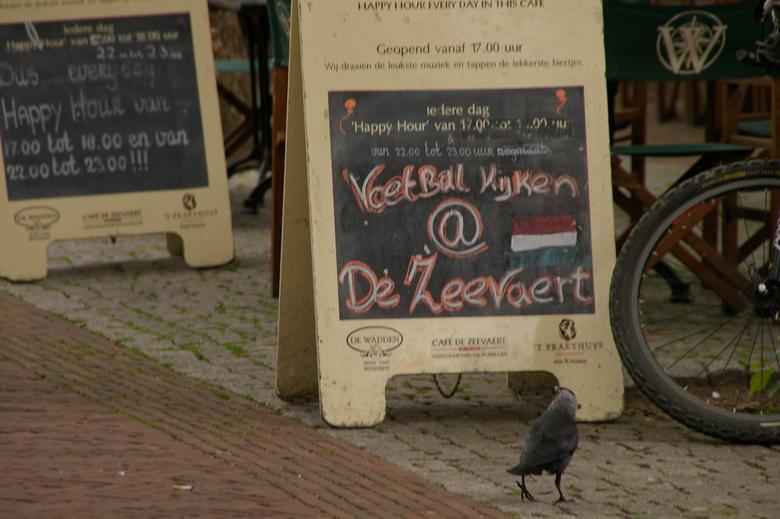 voetbal kijken - zouden vogels ook van voetbal houden