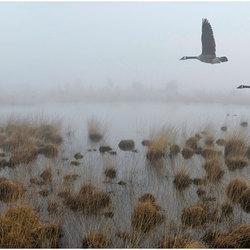 Canadees trio door de mist