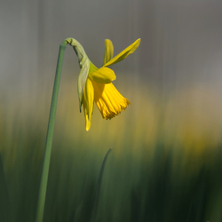 Narcissus and who he is...
